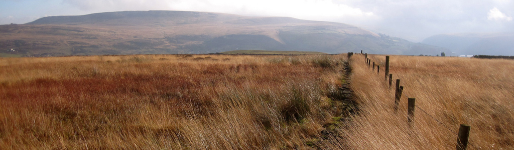 Moorland grass provides habitat for many birds and insects
