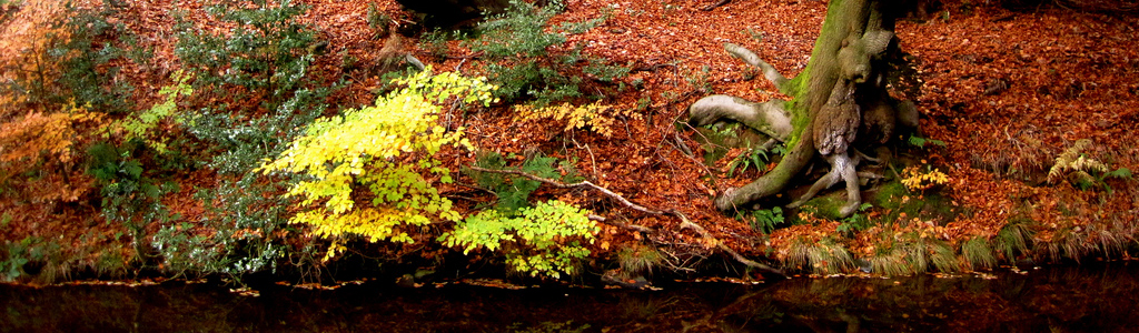 Autumn trees beside the Rochdale Canal